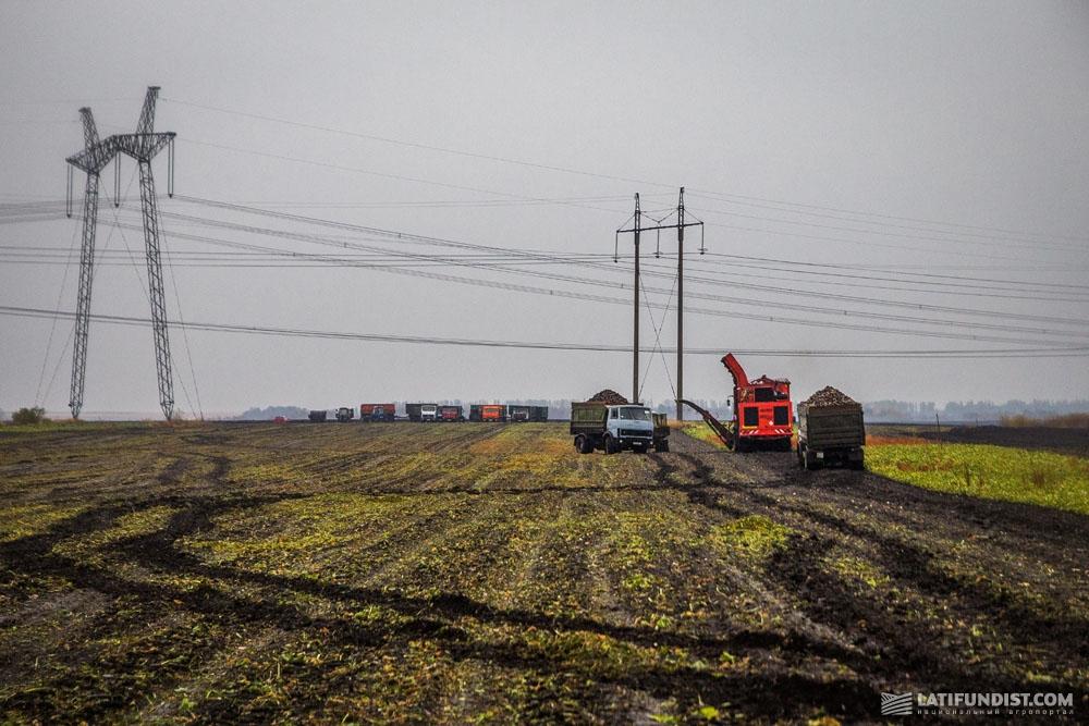 Уборка сахаристых корнеплодов в полях СПК «Овсяницкий»